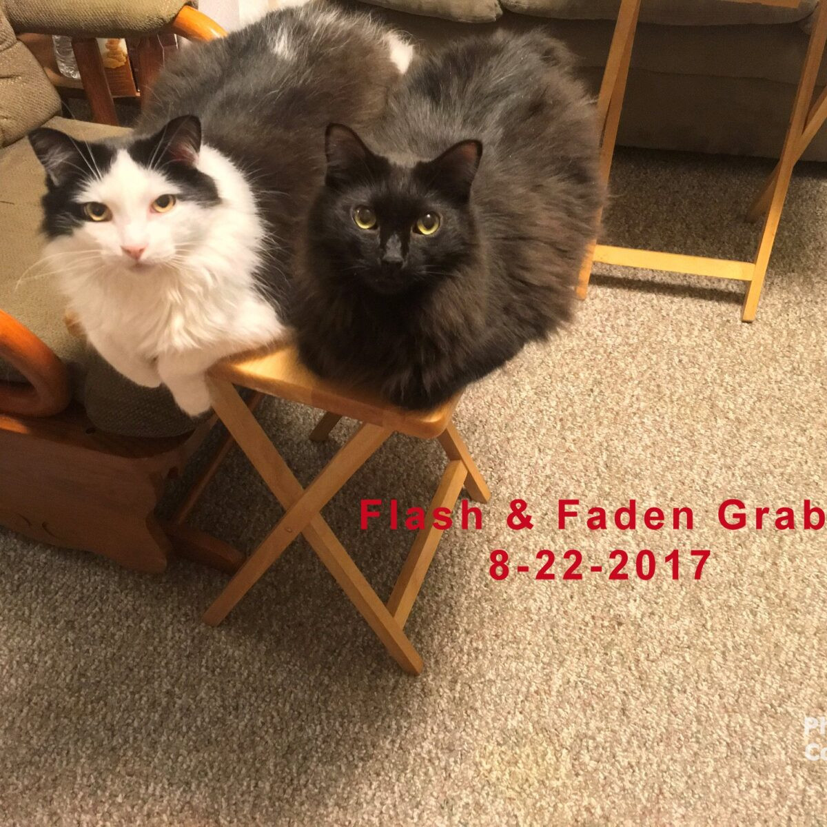 Flash and Faden Grabler 8/22/2017